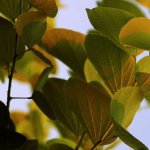 8 Natuurlijke Stimulansen voor Keiharde Erecties