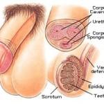 8 Tips om een Erectie te Krijgen / Verbeteren voor Langere Erecties